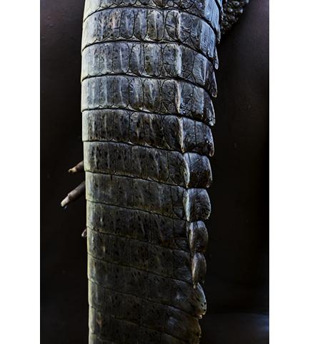 http://marieleroux.com/indexhibit/files/gimgs/35_reptile.jpg